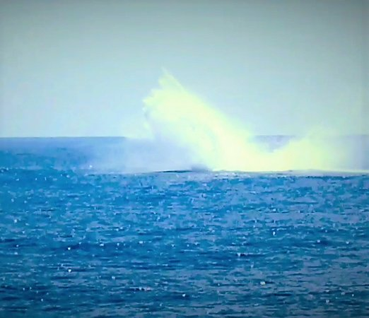 Star of Honolulu - Dinner and Whale Watch Cruises: Huge splash from the breach!