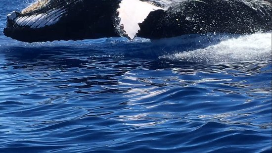 Ka'anapali, Hawái: The whale that breached 30 feet away from the boat.
