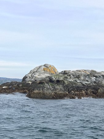 Eagle Wing Whale Watching Tours: photo0.jpg