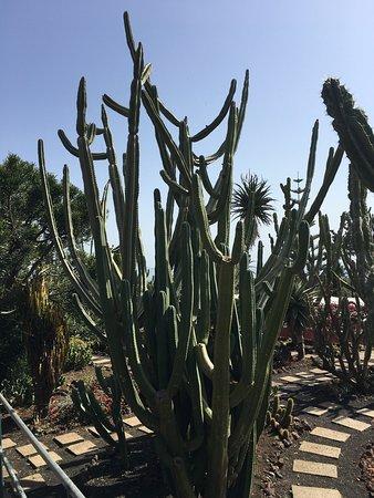 Madeira Botanical Garden : photo4.jpg