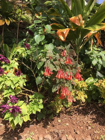 Madeira Botanical Garden : photo6.jpg