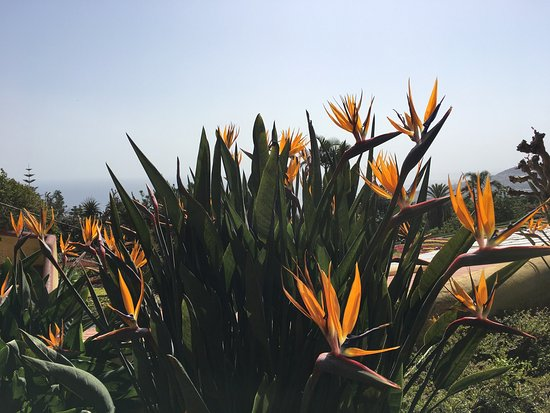 Madeira Botanical Garden : photo7.jpg