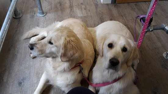 St Agnes, UK: Lovely tea room, genuinely dog and human friendly. Very tasty food and drinks.