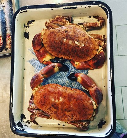 Axminster, UK: Preparing a crab