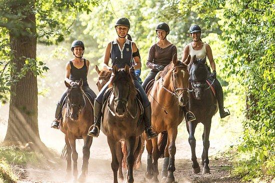 Maisons-Laffitte, França: Sur les pistes cavalières en forêt de Saint-Germain