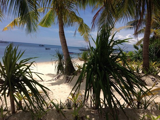 Malapascua Exotic Bar & Restaurant : photo4.jpg