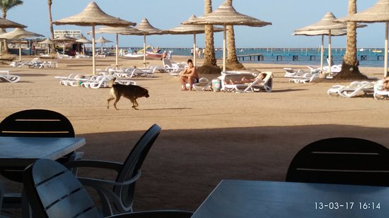 Это на пляже фото 636-327