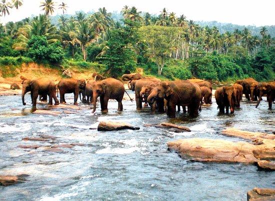 Pinnawala, Sri Lanka: Elefanten Waisenhaus