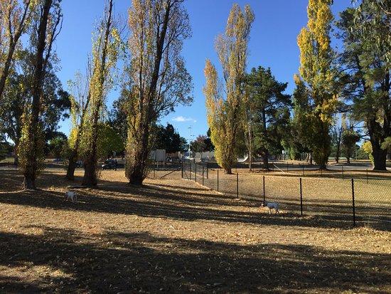 Yass, Αυστραλία: Fenced Off Leash Dog Park short walk from Caravan Park