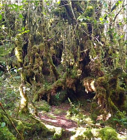 Brinchang, Malasia: The enchanted Mossy Forest