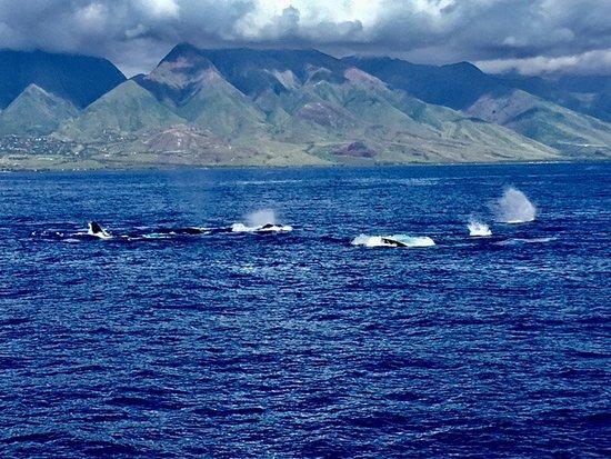 Maalaea, Hawái: Vue magnifique sur Maui et sur les baleines