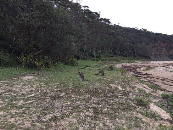 Shoalhaven, Australia: photo1.jpg