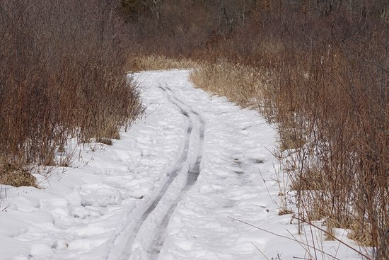 Environmental Education Center at Lord Stirling Park: Snow covered trail