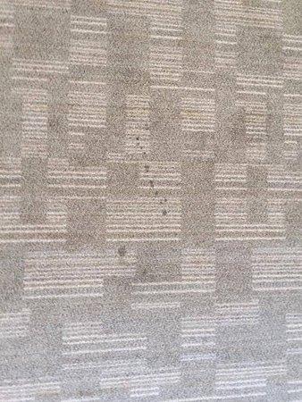 de belles taches sur la moquette picture of appart 39 hotel ferney geneve ferney voltaire. Black Bedroom Furniture Sets. Home Design Ideas