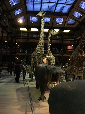 Photo of Tourist Attraction Grande Galerie de l'Evolution at Jardin Des Plantes - 36, Rue Geoffroy - Saint Hilaire 75005, Paris 75005, France