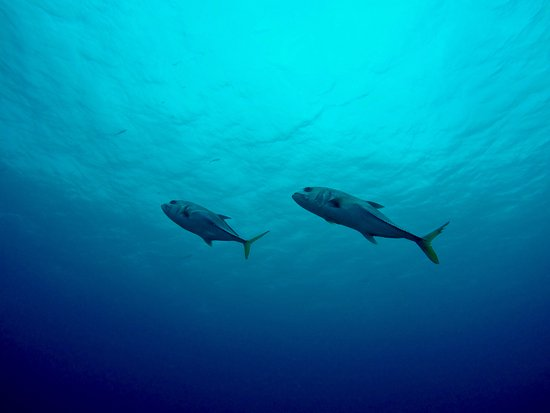 Belize Diving Services: Tunas
