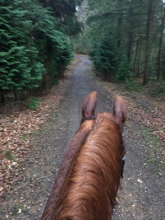 Glenealy, Ireland: Absolute heaven: a willing horse and a beautiful trail!