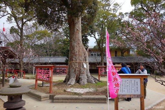 Chikugo, Japón: 幸福の一位の木