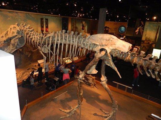 Μουσείο Royal Tyrrell: Large dinosaur