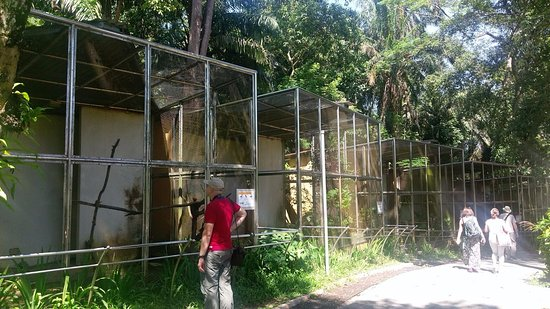 Kuala Lumpur Bird Park: Unnecessary cages under a netted area, to keep birds within easy view for tourists.