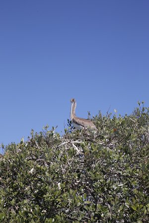 Merritt Island, FL: Big Bird!
