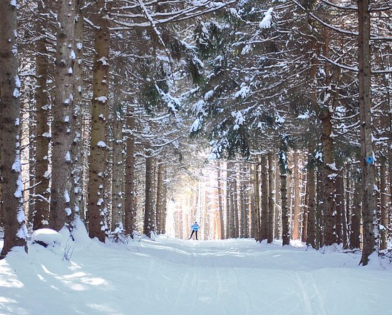 Ripton, VT: Skiing through sunlit forest.