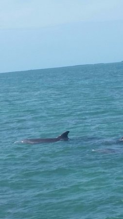 Sugarloaf Key, FL: Dolphin pod in the bay