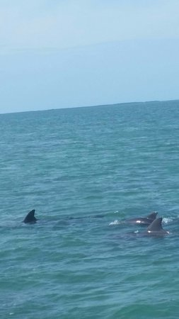 Sugarloaf Key, Floride : Dolphin pod in the bay