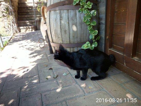 Magione, إيطاليا: patio