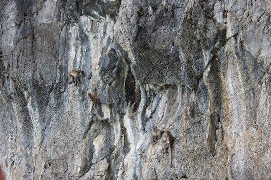Bang Sare, Tajlandia: Обезьяны на скале.