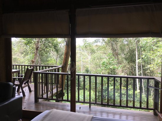 Malanda, Australia: View from bed ...totally private