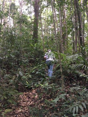 Malanda, Австралия: Upward journey from the Waterfall Walk