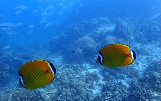 Ban's Diving Resort-billede