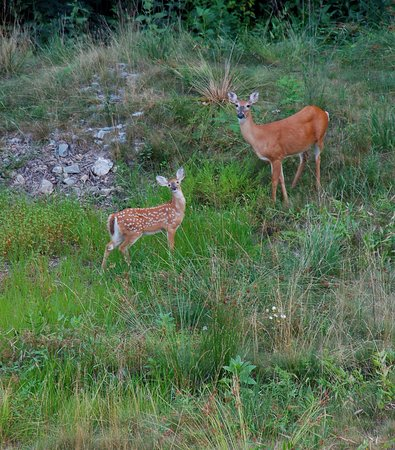 Meadows of Dan, VA: Wildlife at Primland