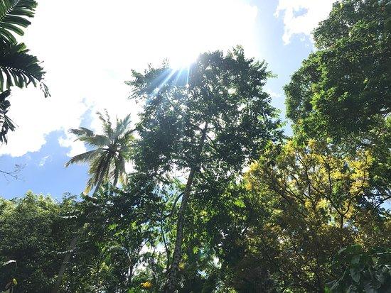 Diamond Botanical Gardens: photo1.jpg