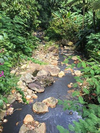 Diamond Botanical Gardens: photo2.jpg