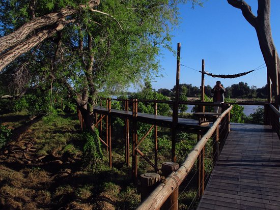 Provincia de Limpopo, Sudáfrica: The tree walk to the Limpopo