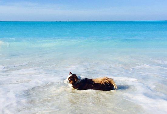Treasure Cay Beach - a very pet friendly community