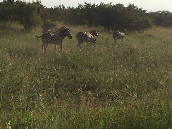 Manyeleti Game Reserve, Sudáfrica: photo4.jpg