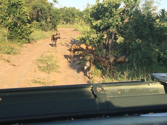 Manyeleti Game Reserve, Sudáfrica: photo6.jpg
