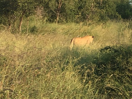 Manyeleti Game Reserve, Sudáfrica: photo7.jpg