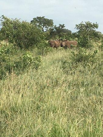 Manyeleti Game Reserve, Sudáfrica: photo9.jpg