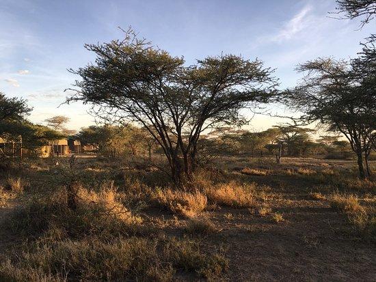 Ang'ata Migration Ndutu Camp Photo