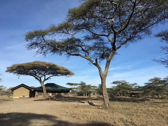 Ang'ata Migration Ndutu Camp Photo