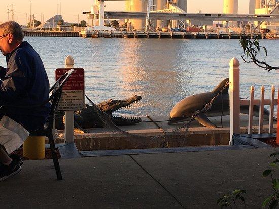 Port Canaveral, Flórida: photo2.jpg