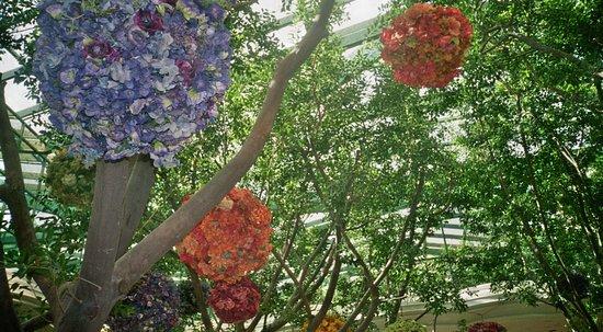 Wynn Las Vegas: Botanical Gardens Inside The Wynne