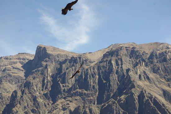 Cabanaconde, เปรู: Vol de condor au Mirador Cruz del Condor