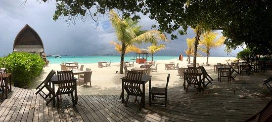 Haa Dhaalu Atoll: angsana