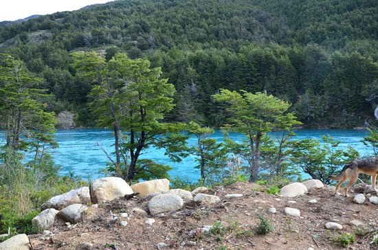 Puerto Bertrand, Chili: Desde el Lodge se ve entre los árboles el hermoso río Baker.