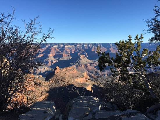Thunderbird Lodge: My best shot of The Grand Canyon seen through small trees